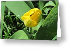 Tulip Day Old Bud Greeting Card