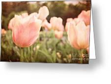Tulip Dreams Greeting Card