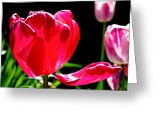 Tulip Extended Greeting Card