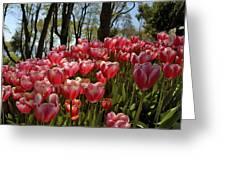 Tulip Festival Greeting Card