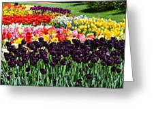Tulip Field 1 Greeting Card