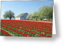 Tulip Field In Washington Stae Usa Greeting Card