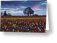 Tulip Field's Last Colors Greeting Card