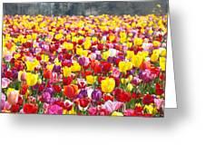 Tulip Flower Festival Art Prints Spring Greeting Card