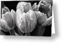 Tulip Flowers Black And White Greeting Card