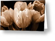 Tulip Flowers Sepia Monochrome Greeting Card