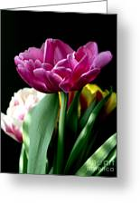 Tulip For Easter Greeting Card