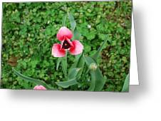 Tulip From Above Greeting Card