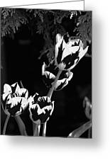 Tulip Group In Black And White Greeting Card