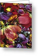 Tulip Heads Greeting Card