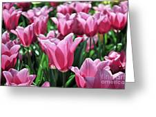 Tulip Heaven Greeting Card