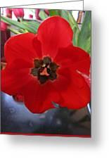 Tulip Mania 20 Greeting Card