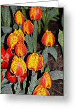 Tulip Mania Greeting Card