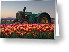 Tulip Morning Greeting Card
