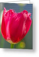 Tulip On The Gray Background Greeting Card