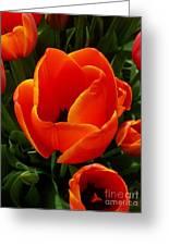 Tulip Orange Flower Greeting Card
