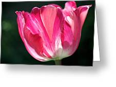 Tulip Painted In Shades Of Pink Greeting Card by Rona Black