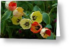 Tulip Parade Greeting Card