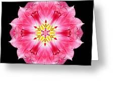 Tulip Peach Blossom IIi Flower Mandala Greeting Card
