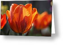 Tulip Prinses Irene Greeting Card by Rona Black