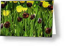 Tulip Race Time Greeting Card