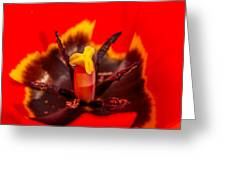 Tulip Stamp Greeting Card