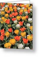 Tulip Stretch Greeting Card