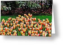 Tulip Stripe Garden Greeting Card