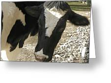 Tulip The Cow Greeting Card