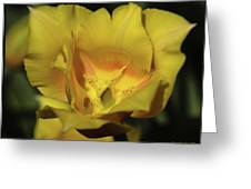 Tulip Time Hopeless Love Greeting Card