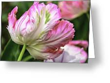 Tulip Time Pink And White Greeting Card