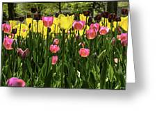 Tulip Time Pink Yellow Black Beauty Greeting Card