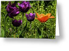Tulip Time Purple And Orange Greeting Card