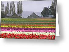 Tulip Town Barns Greeting Card