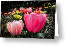 Tulip Trail Greeting Card