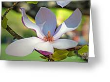 Tulip Tree Bloom Greeting Card