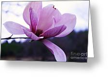 Tulip Tree Blooming Greeting Card