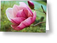 Tulip Tree In Bloom Greeting Card