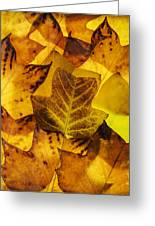 Tulip Tree Leaves In Autumn Greeting Card