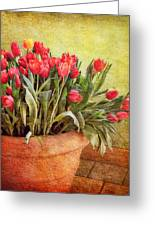 Tulip Tumble Greeting Card