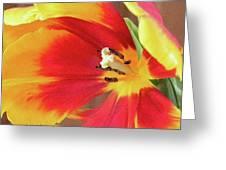 Tulip Warm Tones Greeting Card
