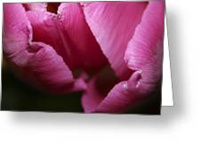 Tulip 3 Greeting Card