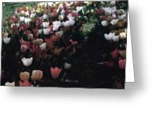 Tulipans Greeting Card