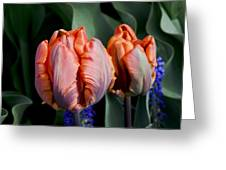 Irene Parrot Tulips Greeting Card