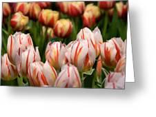 Tulips 31 Greeting Card
