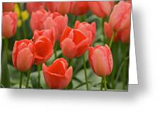 Tulips 33 Greeting Card