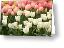 Tulips 35 Greeting Card