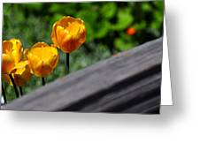 Tulips 5987 Greeting Card