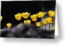 Tulips 6077 Greeting Card