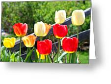 Tulips Aglow Greeting Card by James Hammen
